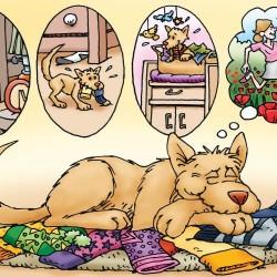 Roméo - Le petit chien qui a peur de tout